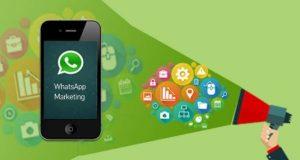 whatsapp local marketing better call leo